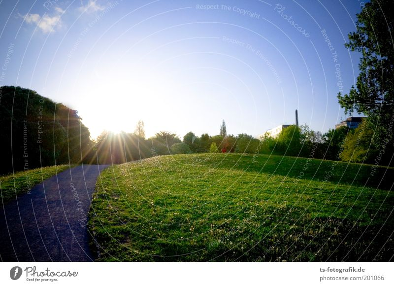 Nature Beautiful Sky Tree Sun Green Blue Plant Summer Relaxation Meadow Grass Spring Garden Happy Lanes & trails