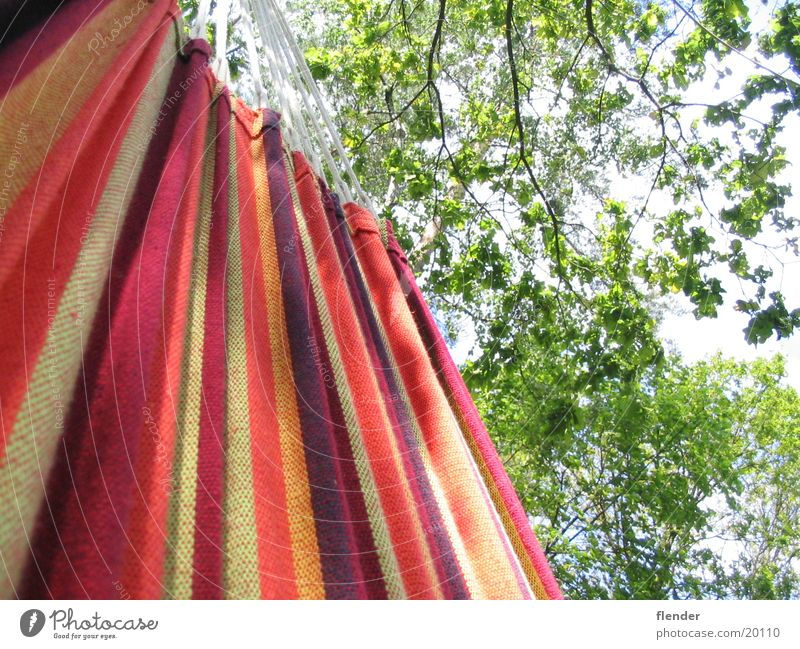 Sky Tree Summer Leaf Leisure and hobbies Hammock