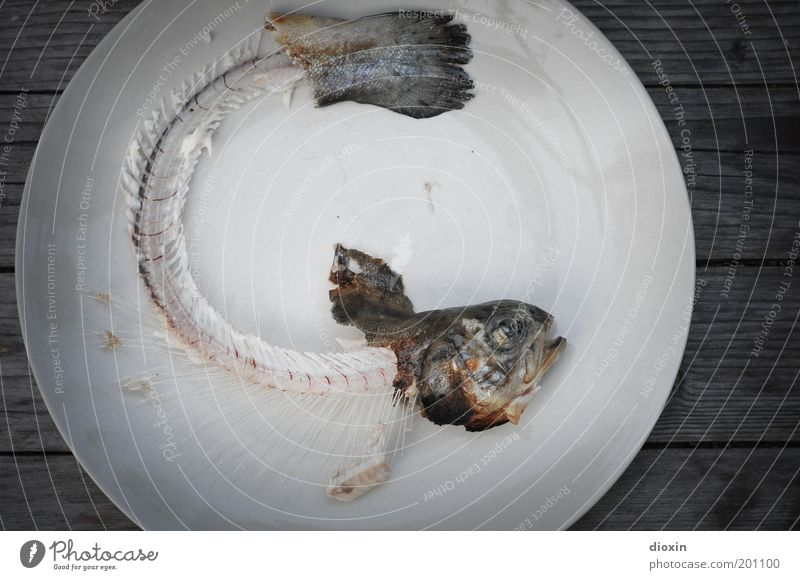 Fish is´ all, baby! Food Nutrition Organic produce BBQ season Plate Animal Dead animal Animal face Fin Tail fluke Trout Fish bone Head Eyes Muzzle 1 Lie Natural