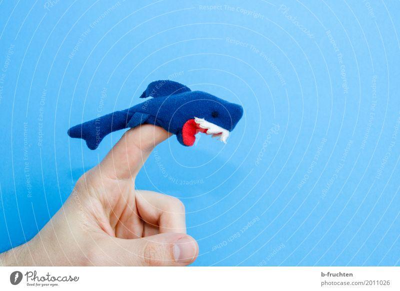 Careful, biting! Fingers Puppet theater Ocean Aquarium Playing Aggression Threat Wild Anger Blue Colour Inspiration Shark felt figure Felt Teeth Set of teeth