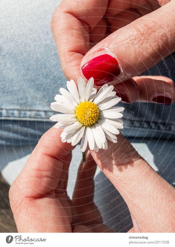 Summer Hand Flower Calm Joy Spring Love Emotions Happy Contentment Wait Blossoming Adventure Joie de vivre (Vitality) Fingers Romance
