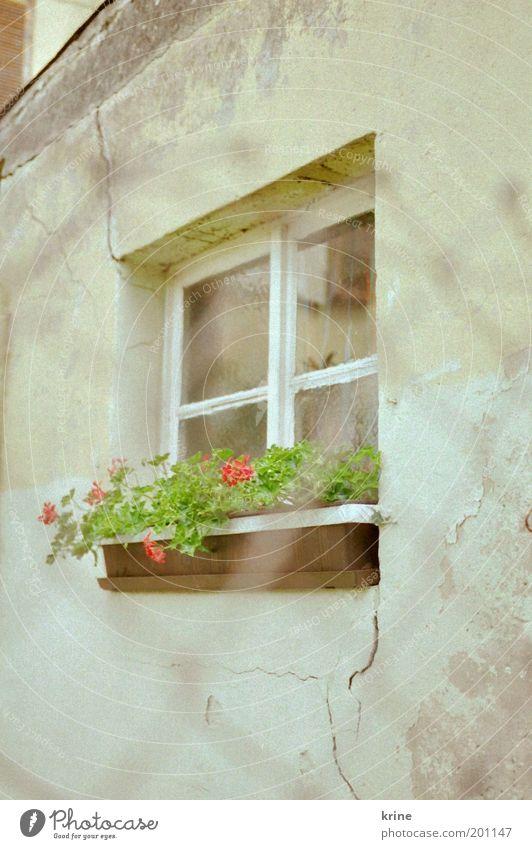 Old Summer Calm Window Spring Facade Fresh Retro Observe Derelict Trashy Fence Nostalgia Plaster Backyard Neighbor
