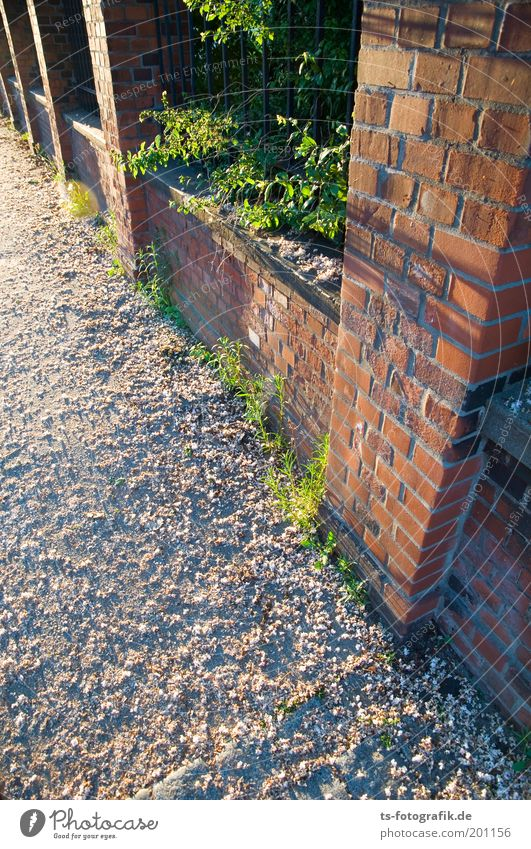 Green Red Life Blossom Lanes & trails Perspective Esthetic Growth Brick Fragrance Fence Bud Sharp-edged Foliage plant Exclusion Wall (barrier)