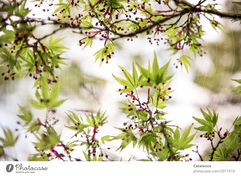 Sky Nature Plant Green Tree Red Leaf Spring Movement Garden Brown Moody Design Pink Park Growth