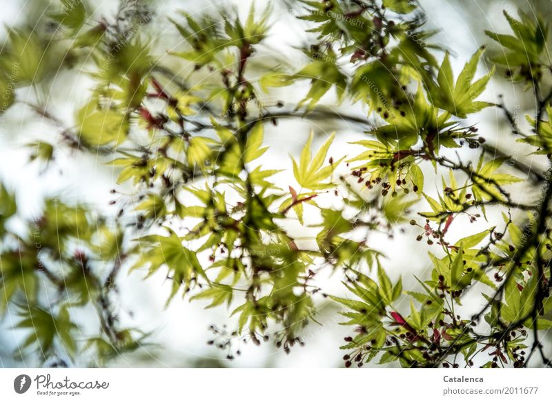 Nature Plant Green Tree Red Relaxation Leaf Yellow Blossom Spring Movement Garden Brown Moody Park Esthetic