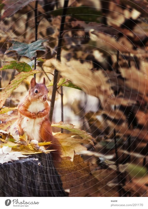 Nature Beautiful Tree Plant Leaf Animal Environment Autumn Wild animal Sit Cute Observe Watchfulness Autumn leaves Paw Squirrel