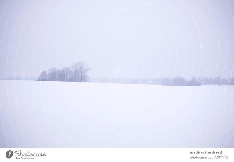 Sky Nature Tree Plant Winter Cold Meadow Dark Snow Environment Landscape Ice Field Horizon Fog Gloomy
