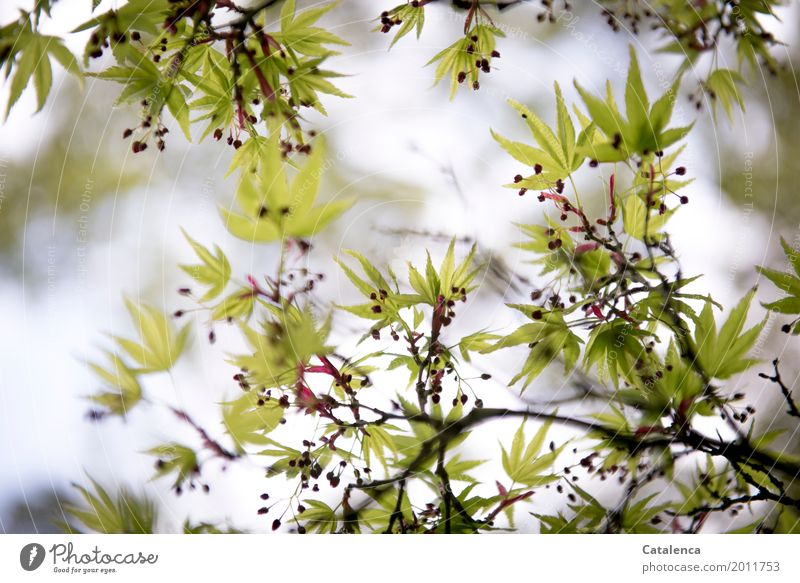 Sky Nature Plant Green Tree Red Leaf Spring Garden Gray Brown Moody Pink Park Growth Esthetic
