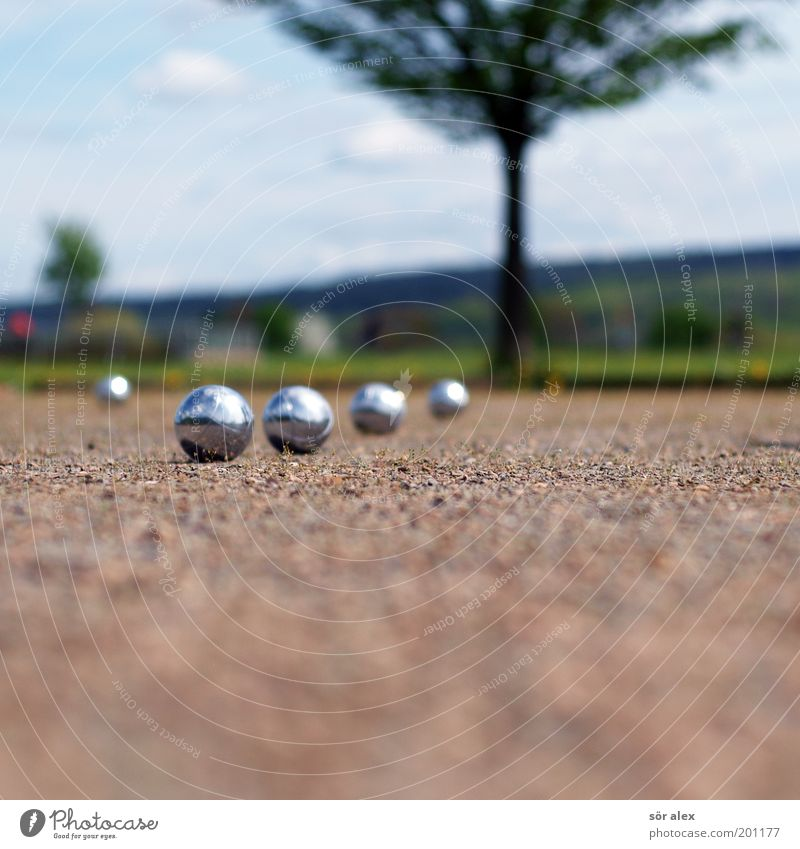Boule ACTION Boules Career Success Team Sand Summer Tree Grass Metal Sphere Blue Brown Green Silver Calm Leisure and hobbies Copy Space bottom 4 Single-minded