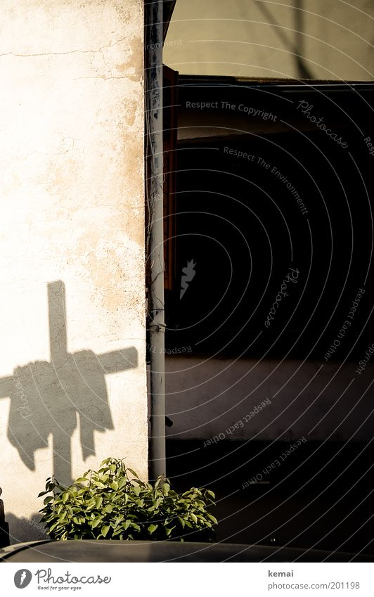 A cross Feasts & Celebrations Pentecost Culture Plant Foliage plant Wall (barrier) Wall (building) Drainpipe Christian cross Shadow Rag Silhouette Sign Black