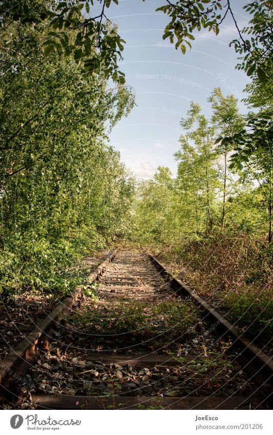 Nature Beautiful Tree Plant Summer Vacation & Travel Loneliness Far-off places Forest Life Freedom Grass Beginning Wild Travel photography Railroad tracks