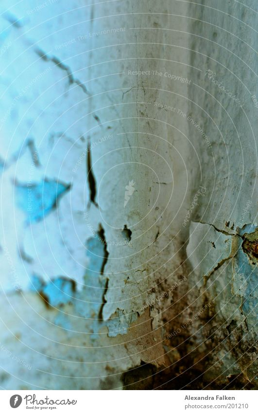 skin aging Wallpaper Room Cold Blue Mold Damp Damage Broken Patch of colour Crack & Rip & Tear Flake off Corner of the room Dirty Colour photo Interior shot