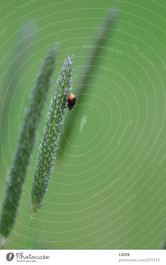 Nature Green Plant Calm Loneliness Animal Grass Small Climbing Insect Downward Beetle Individual Foliage plant Color gradient Dazzling