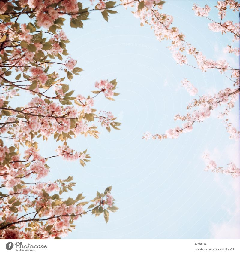 Nature Sky Tree Sun Blue Plant Calm Relaxation Blossom Spring Park Air Bright Pink Environment Fresh