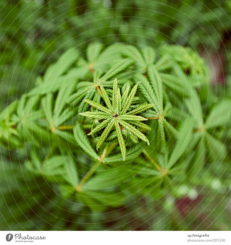 Tree Green Plant Spring Garden Star (Symbol) Growth Transience Beautiful weather Gardening Chestnut tree Chestnut leaf