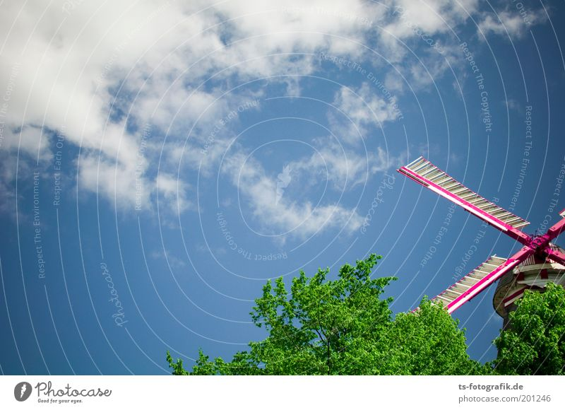Sky Tree Clouds Colour Movement Wood Park Line Pink Wind Happiness Infinity Exceptional Past Rotate Landmark
