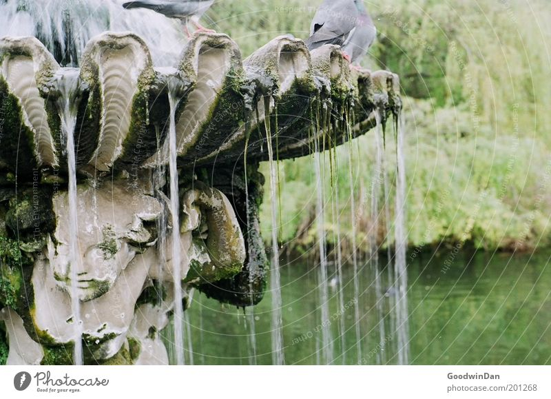 Hyde Park Fountain Relaxation Dream Exceptional Authentic Free Beautiful Colour photo Exterior shot Copy Space right Dawn Central perspective Well Water Pigeon