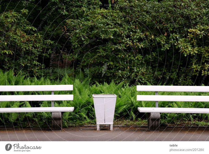 Nature White Tree Green Plant Loneliness Dark Wood Gray Park Moody Metal Wait Environment Arrangement