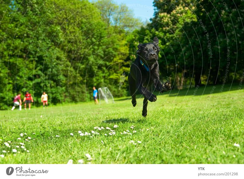 Nature Green Tree Dog Plant Joy Animal Black Meadow Life Environment Playing Movement Grass Jump Park