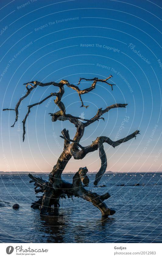 Nature Blue Water Tree Calm Winter Black Environment Yellow Coast Exceptional Brown Moody Orange Pink Horizon