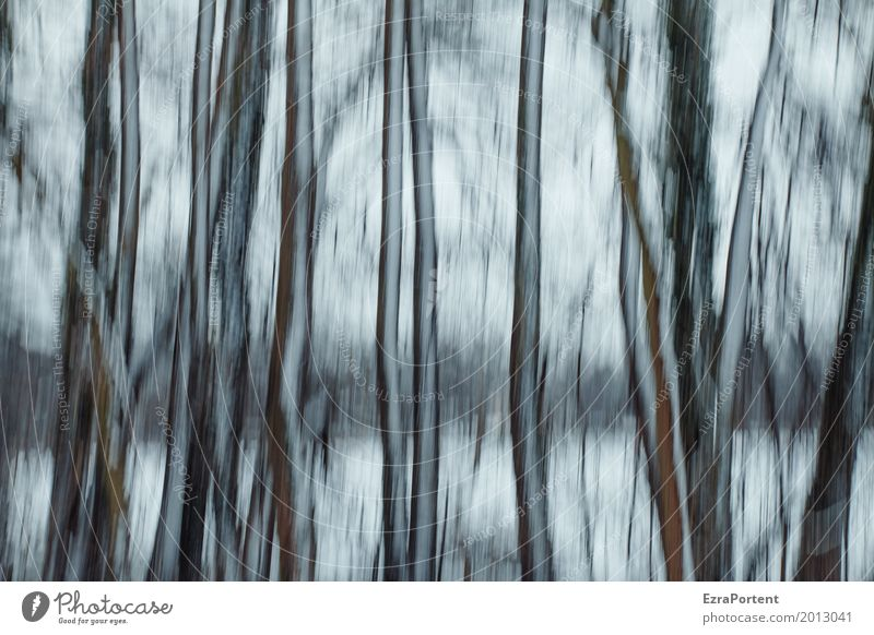 |||| Style Design Decoration Environment Nature Landscape Winter Climate Ice Frost Snow Forest Wood Line Cold Gray Black White Sadness Dream Tree Tree trunk