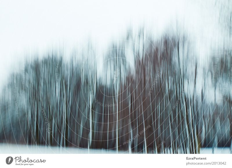 ||||| Decoration Environment Nature Landscape Sky Winter Climate Climate change Weather Ice Frost Snow Tree Forest Wood Line Cold Gray Black White Design Colour