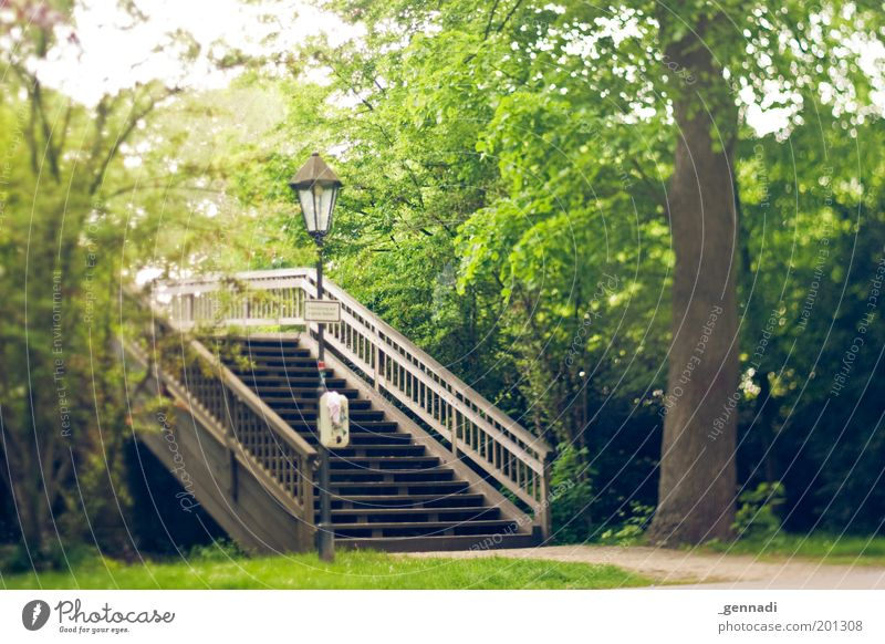 Oh happy day Environment Nature Plant Tree Bridge railing Höxter To enjoy Colour photo Exterior shot Experimental Deserted Shallow depth of field