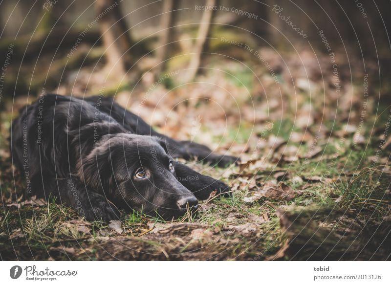 Paula Pt.2 Nature Plant Earth Forest Pet Dog Animal face Pelt 1 Observe Lie Calm Black Labrador retriever Leaf Grass Paw Break Colour photo Exterior shot