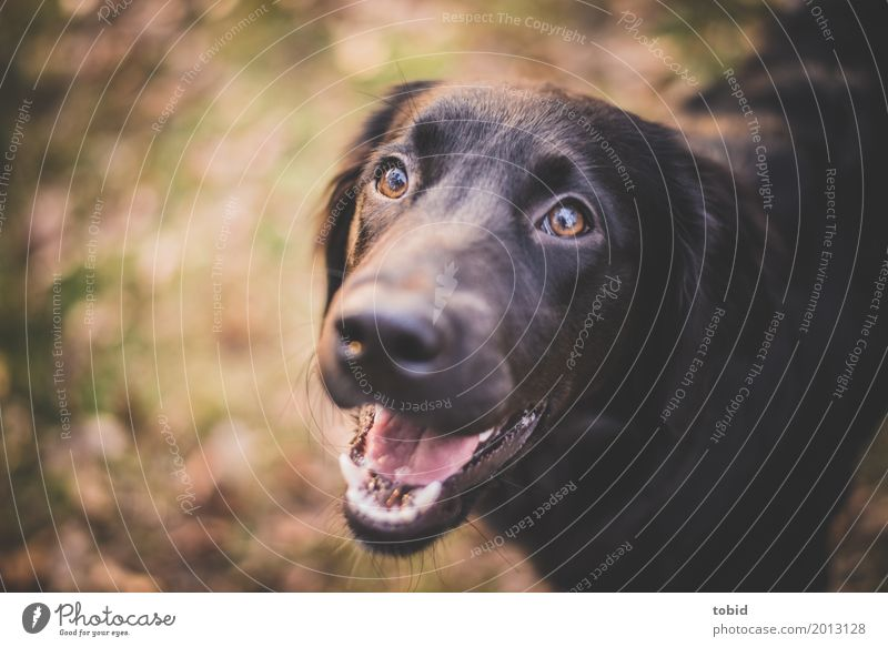 Nature Dog Leaf Animal Joy Black Happy Illuminate Happiness Beautiful weather Observe Friendliness Soft Pelt Pet Animal face