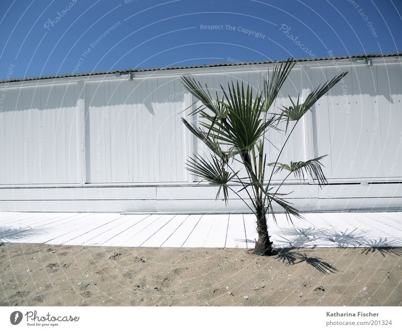 Yesterday freshly painted Vacation & Travel Summer Beach Environment Nature Plant Sand Air Sky Cloudless sky Sunlight Foliage plant Exotic Palm tree Wood Blue