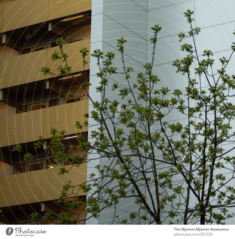 White Tree Green City House (Residential Structure) Wall (building) Window Wall (barrier) Architecture Flat (apartment) Door Gold High-rise Facade New Simple
