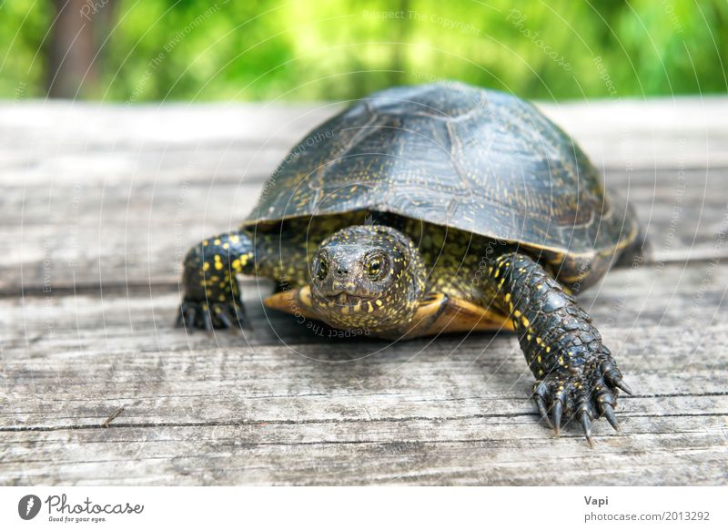 Big turtle on old wooden desk Exotic Summer Sun Garden Desk Table Environment Nature Animal Sunlight Spring Grass Park Pet Wild animal 1 Wood Old Crawl Small