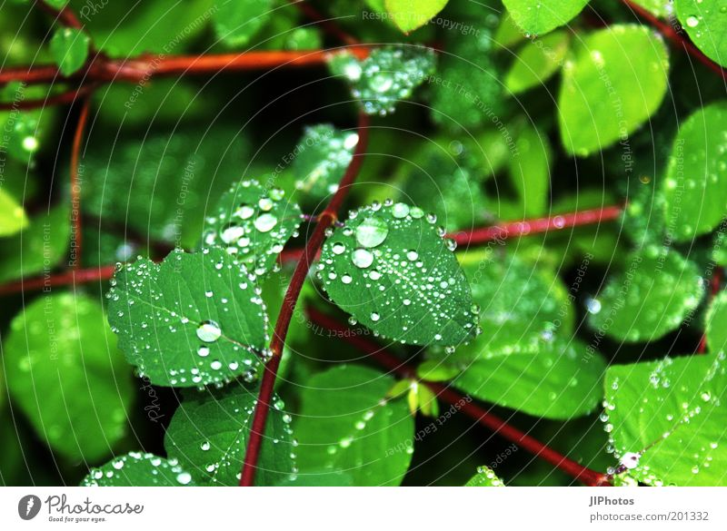 Water Green Plant Leaf Rain Drops of water Wet Bushes Foliage plant Hydrophobic Natural growth