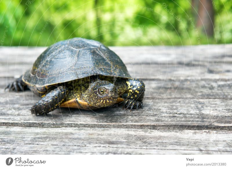 Big turtle on old wooden desk Nature Old Summer Green Tree Animal House (Residential Structure) Forest Yellow Spring Meadow Natural Grass Wood Small Garden
