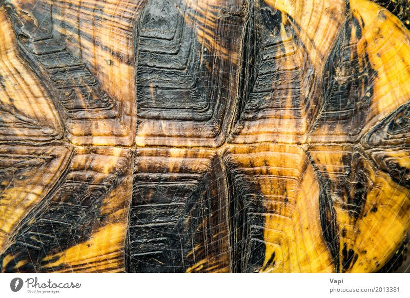 Texture of turtle shell Nature Animal Black Yellow Natural Brown Orange Wild animal Skin Protection Pet Wallpaper Surface Ancient Rough Hard