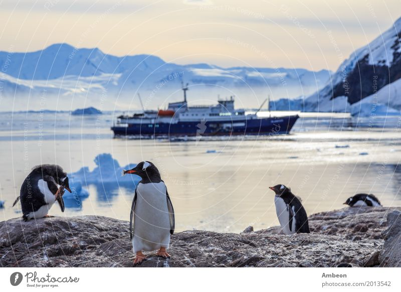 Gentoo penguins standing on the rocks and cruise ship Vacation & Travel Tourism Beach Ocean Winter Snow Mountain Group Environment Nature Landscape Animal Water