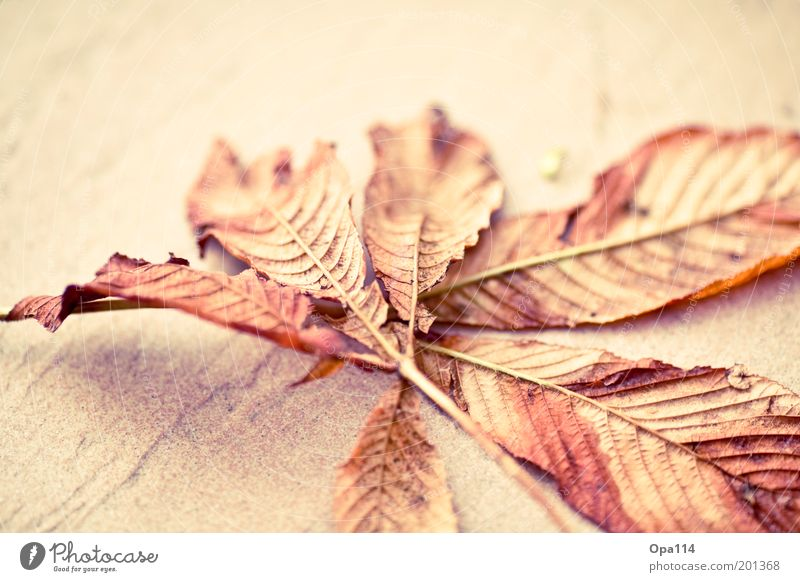 autumn Nature Autumn Beautiful weather Leaf Thin Brown Gold Pink End Cold Transience Change Colour photo Multicoloured Exterior shot Close-up Detail Deserted