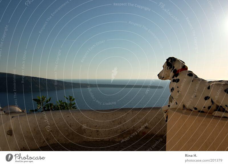 Sky White Ocean Blue Vacation & Travel Animal Style Dog Landscape Moody Wait Elegant Horizon Esthetic Island Tourism