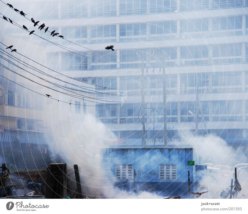 smoky area Far-off places City trip Technology Environment Mombasa Kenya Office building Facade Bird Flock Authentic Exceptional Threat Town Blue Moody Variable