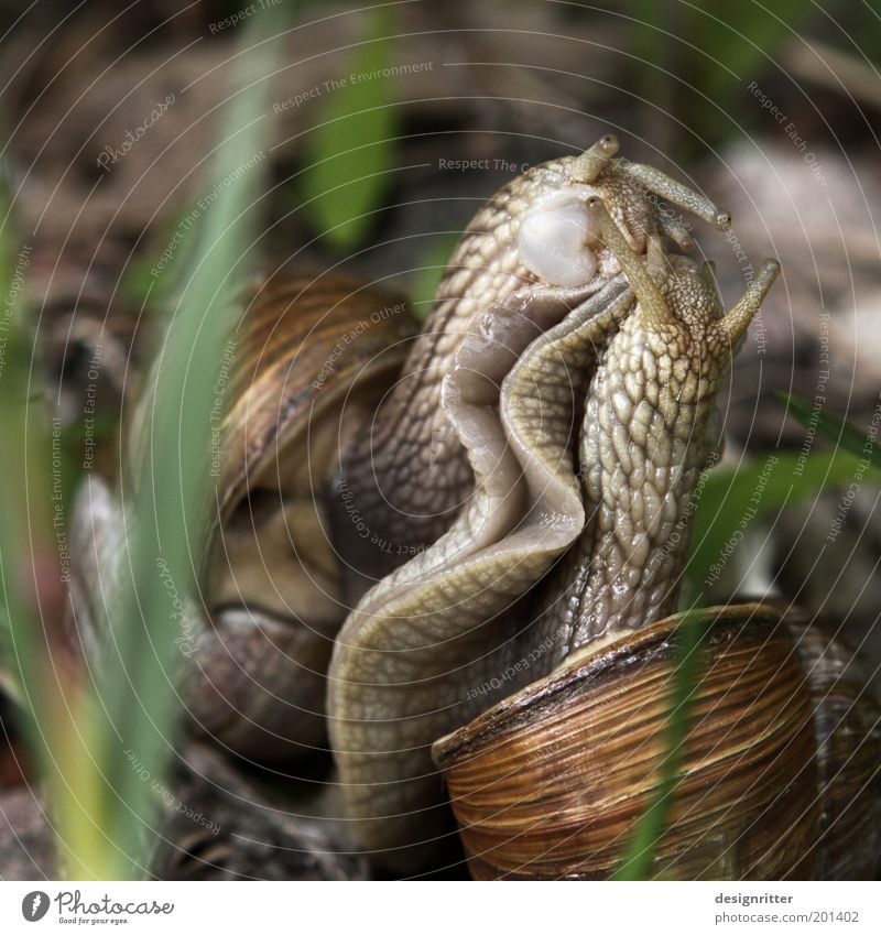 Nature Together Dance Pair of animals To hold on Touch Kissing To enjoy Infatuation Lust Cuddly Snail Disgust Desire Embrace Sympathy