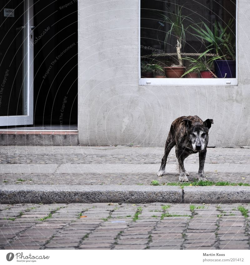 Dog Old City Window Gray Sadness Door Open Facade Wait Poverty Stand Gloomy Safety Observe Protection