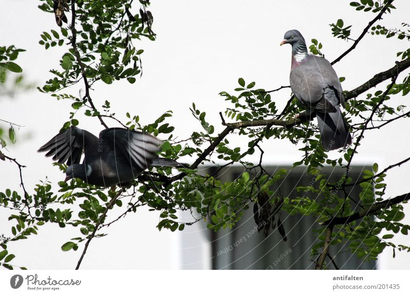 Nature White Tree Green Leaf Black Animal Wall (building) Window Gray Environment Sadness Wall (barrier) Brown Bird Pair of animals