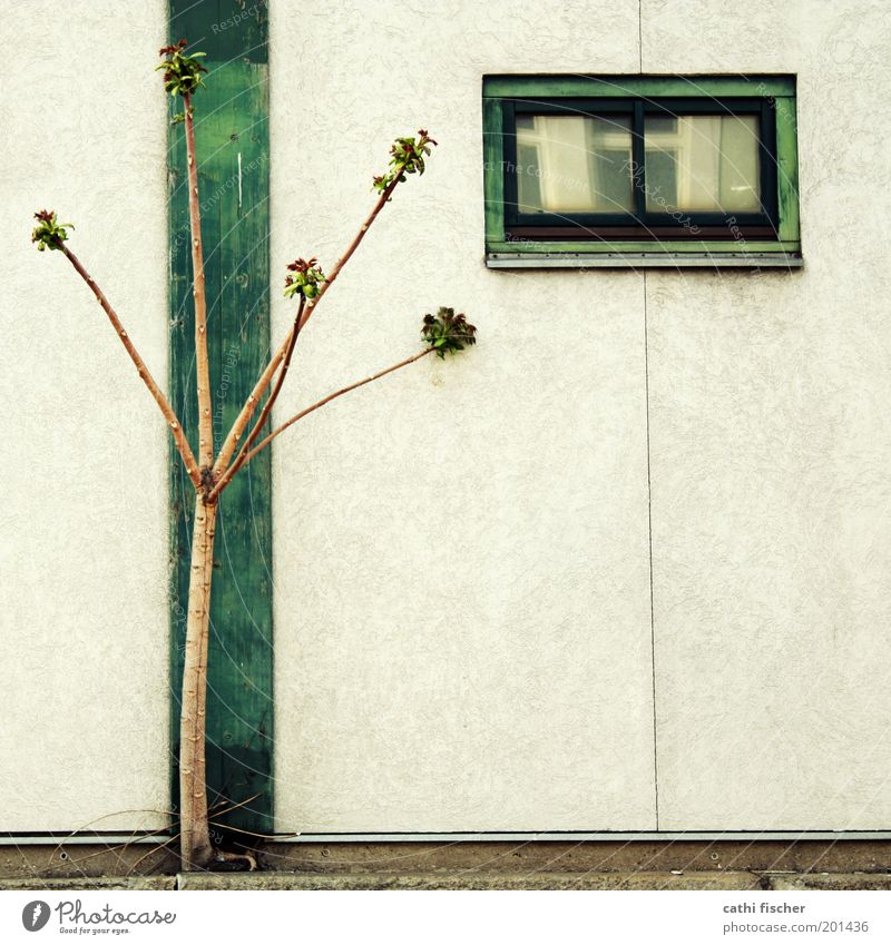 Tree Green Plant Summer House (Residential Structure) Wall (building) Window Spring Wood Wall (barrier) Building Brown Architecture Concrete Growth Cable