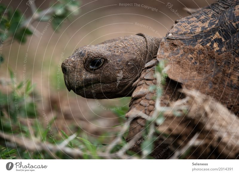 Nature Animal Environment Natural Wild animal Near Animal face Turtle