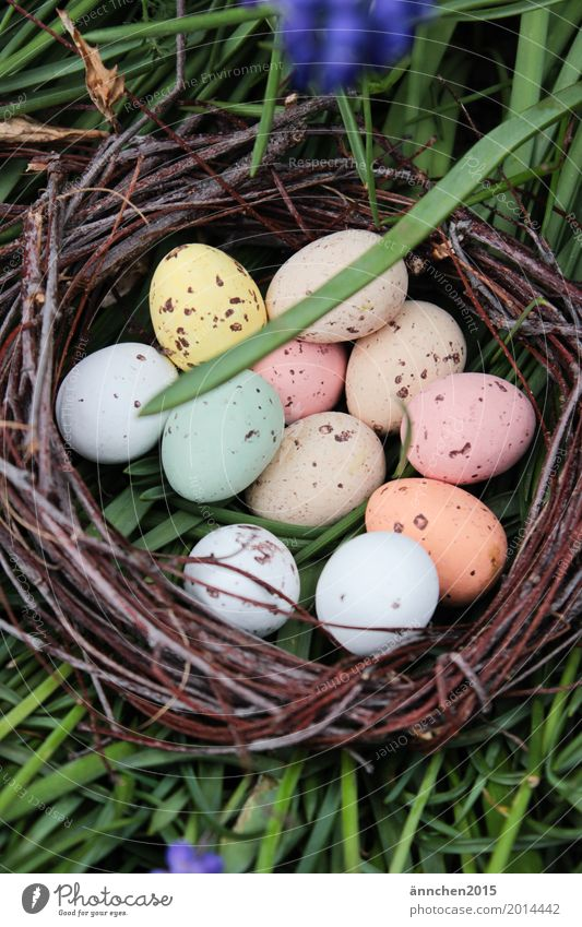 Easter egg hunt eggs Search Spring Nest Grass Green Multicoloured Point Egg Candy Flower Exterior shot Nature