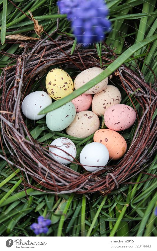 Easter nest Nest Egg Multicoloured Orange White Brown Green Grass Meadow Flower Candy Birch tree Twig Bond Search Exterior shot Nature