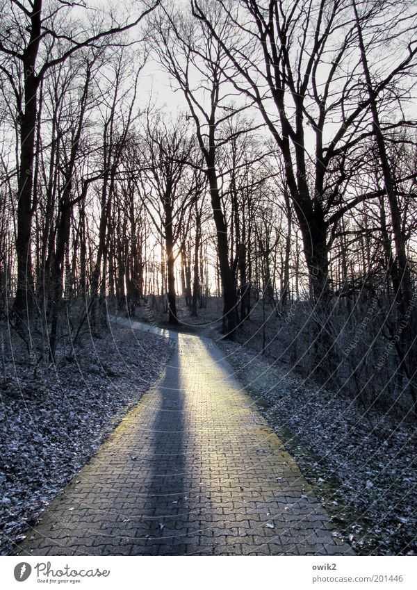 Nature Tree Plant Winter Forest Environment Landscape Wood Lanes & trails Stone Park Ice Climate Illuminate Frost Bushes