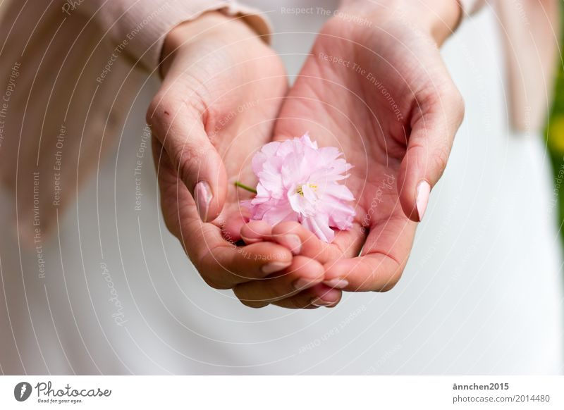 Protect Blossom To hold on Pink Flower Cherry blossom Hand powdery Pastel tone Delicate Love