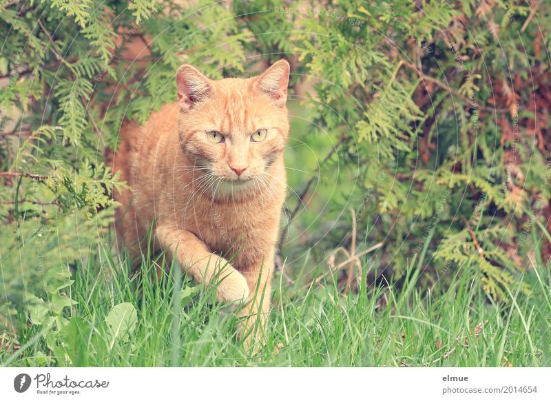 Cat Beautiful Red Calm Movement Garden Orange Elegant Esthetic Adventure Observe Cool (slang) Cute Planning Curiosity Discover