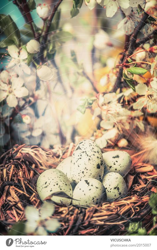 Bird nest with eggs in the bush with spring flowers Design Garden Easter Nature Plant Sunlight Spring Beautiful weather Tree Flower Bushes Leaf Blossom Park